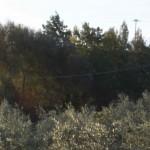 Challendin – l'écoquartier de Chêne-Bougeries